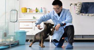 Trung Quốc phát triển và nhân bản chó thám tử để giảm chi phí