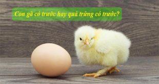 Con gà có trước hay quả trứng có trước? Đã có đáp án chính xác