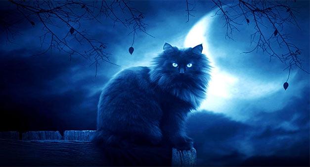 Tại sao con mèo đen nhảy qua người chết thì họ sống lại?
