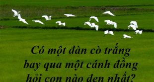 Có một đàn cò trắng bay qua một cánh đồng hỏi con nào đen nhất?
